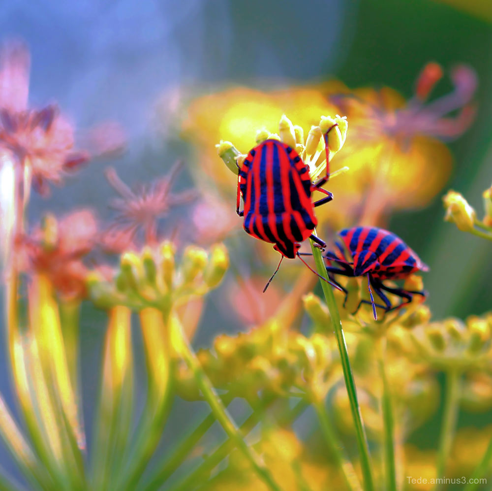 Bugs !!!