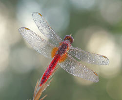 Dragonfly and dew drops !!!