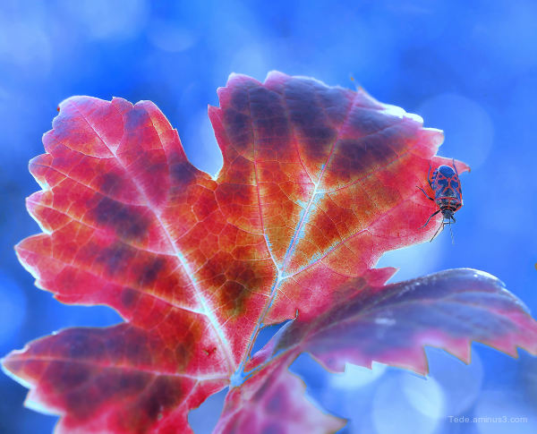 Bug on an autumn leaf !!!