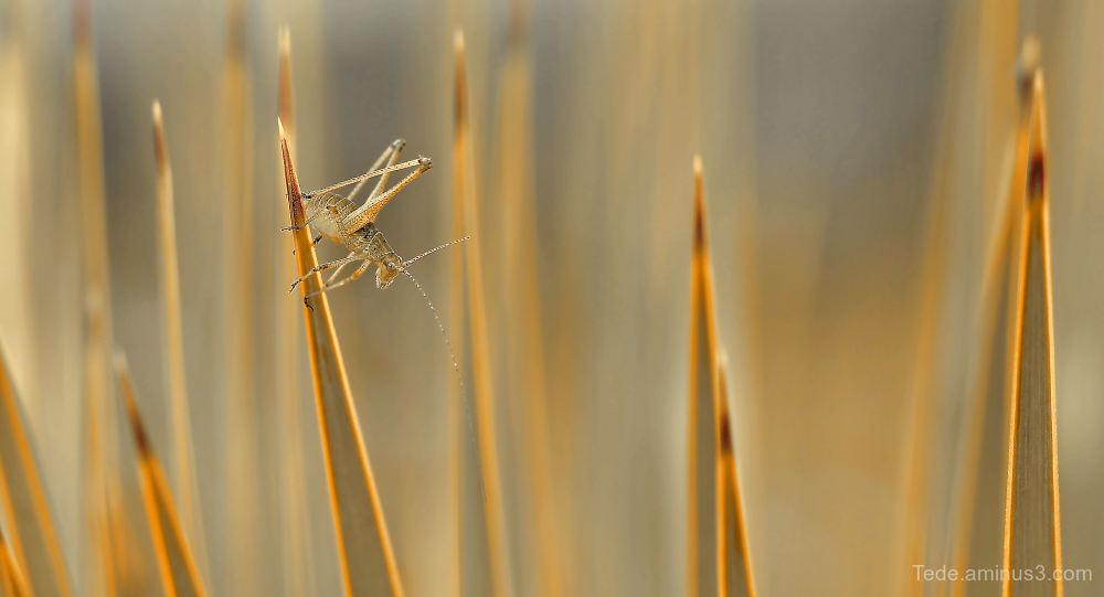 Grasshopper !!!