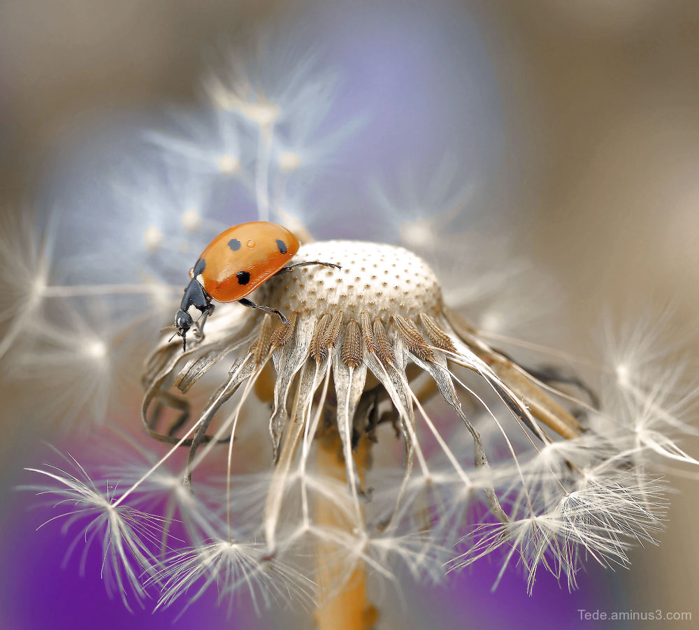 Ladybug on a carousel !!!