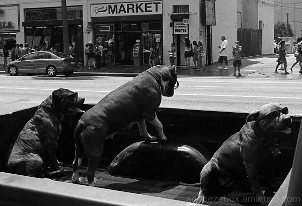 Hot Dogs Hollywood