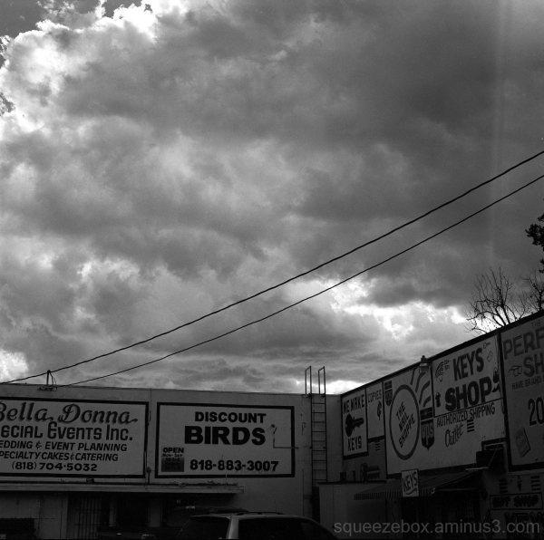 Discount Birds