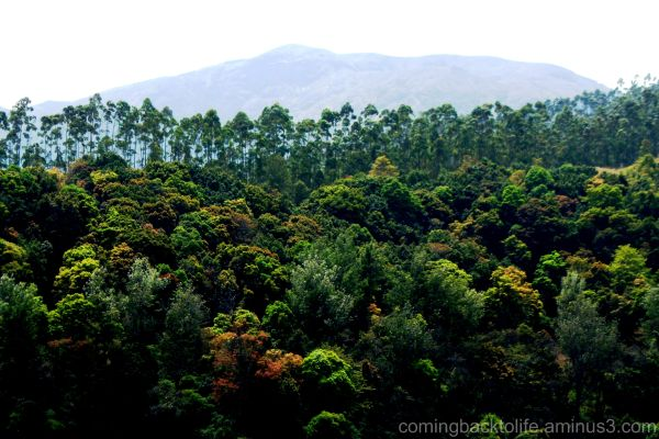 the vivid wilderness