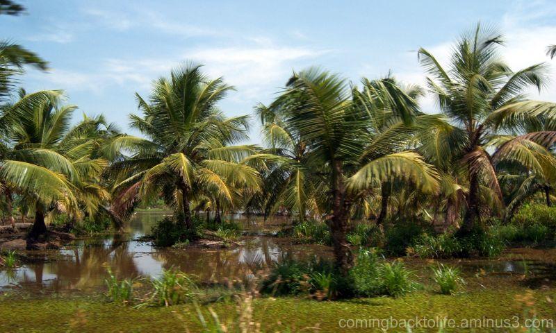 palms on my way