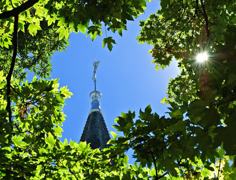 Steeple Through the Trees