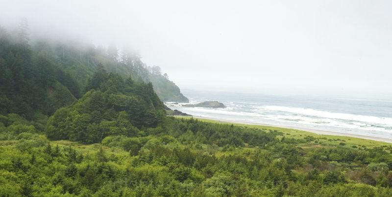 Green foggy forested beach on Washington coast