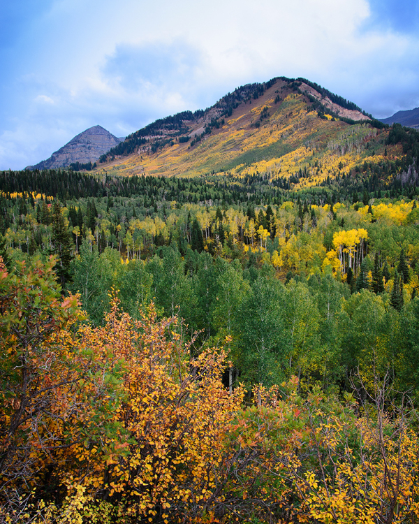 Golden Mountainside