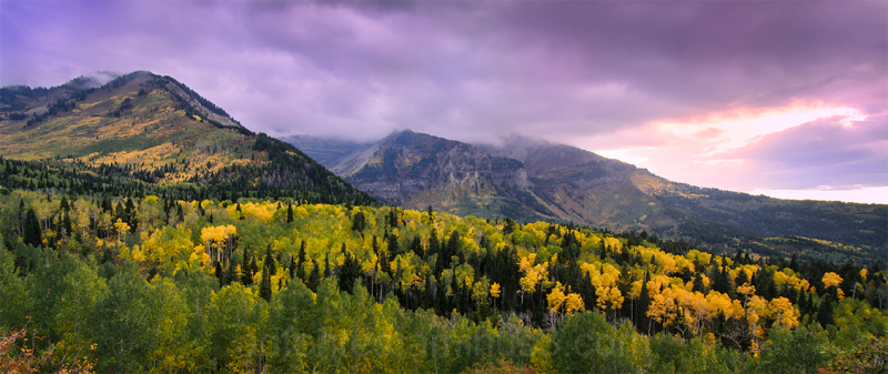 Autumn Evening Among the Aspen