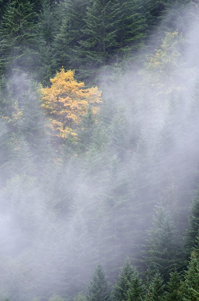 Fall colors between Portland and Tillamook Oregon