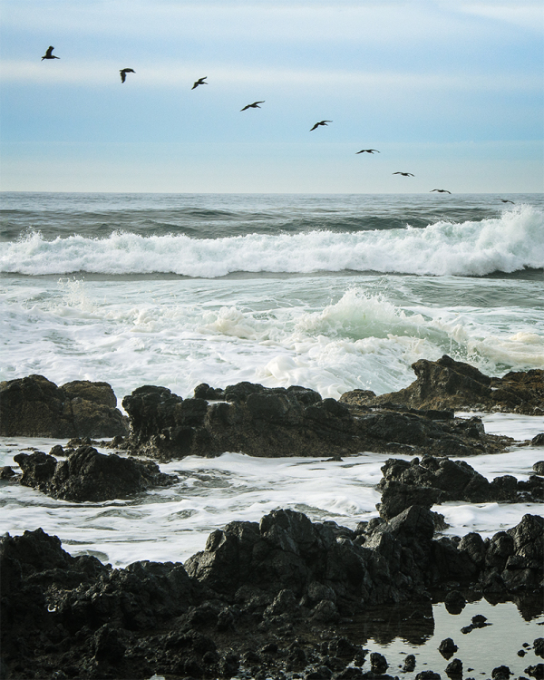 Birds flying in a line along the waves in Oregon
