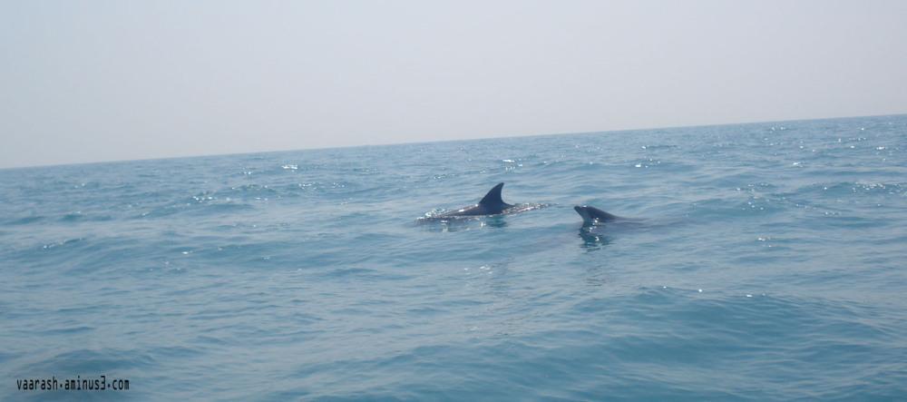 بازی دلفین Dolphin