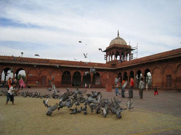 Pigeons in Jama Masjid mosque Delhi India