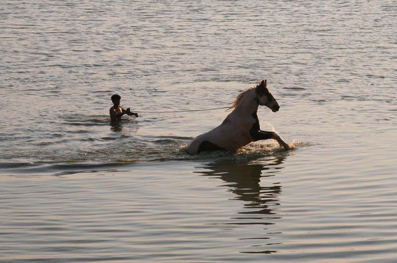 homme et cheval ;le bain ;Inde