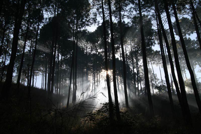 arbres Inde