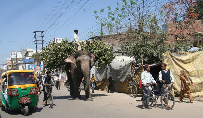 Jaipur trafic elephant