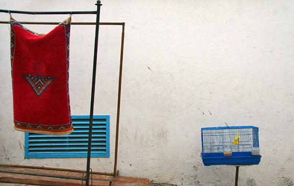 Morocco rabat bird  carpet