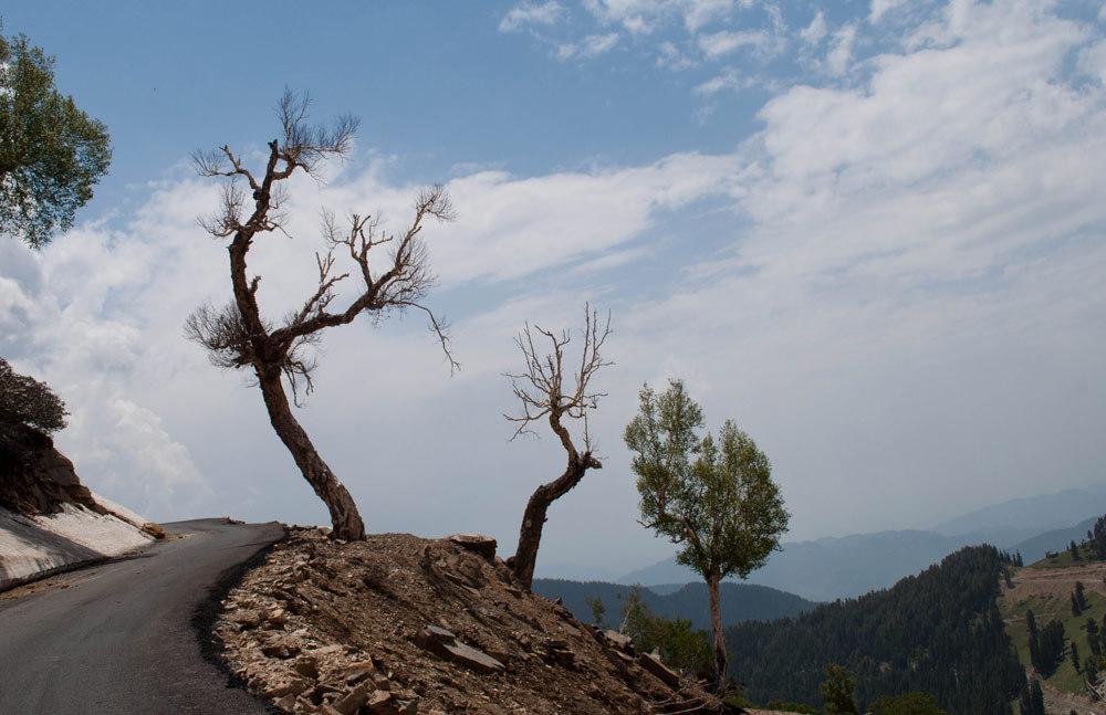 Trees on a raod in Kashmir