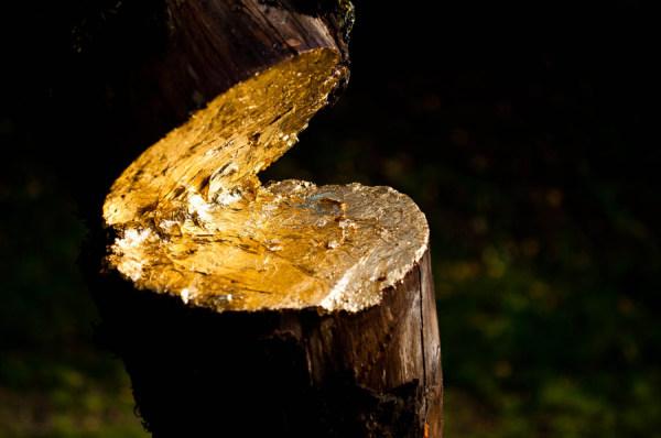 Doré sur tranche  /  Golden  fault