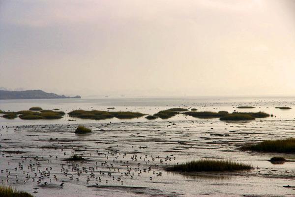 marée basse / low tide