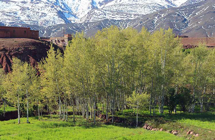 spring in Telouet