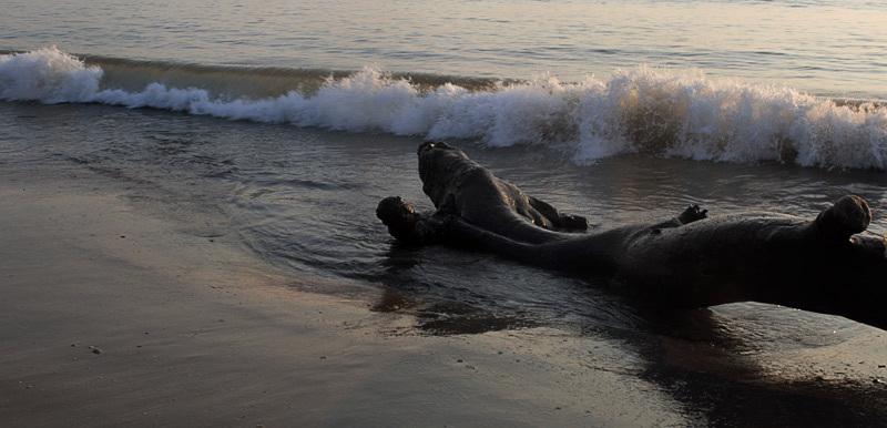 Monstre marin / Sea monster.