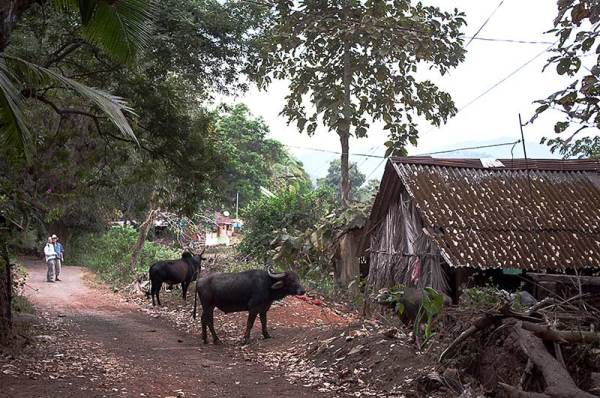 Goa  côté campagne / countryside