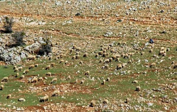 compter les moutons 2