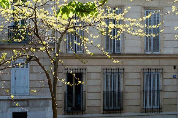 Un arbre dans la ville / A tree in the city 2