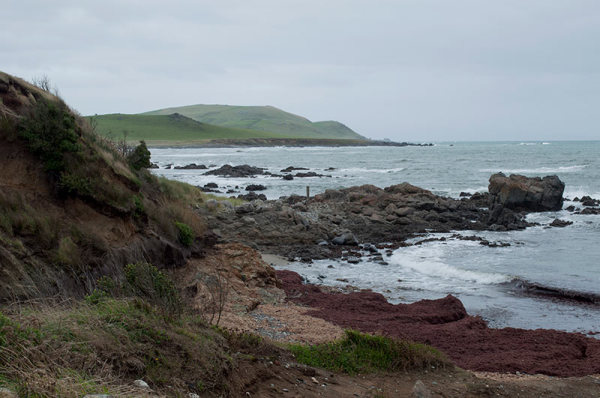 Côte / Coast