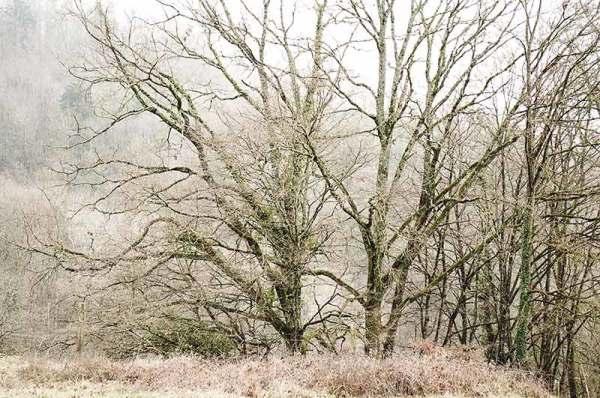 Hiver / Winter
