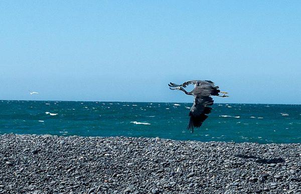 En vol / Fly