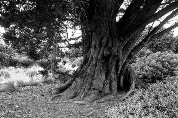 auprès de mon arbre ... next to my tree