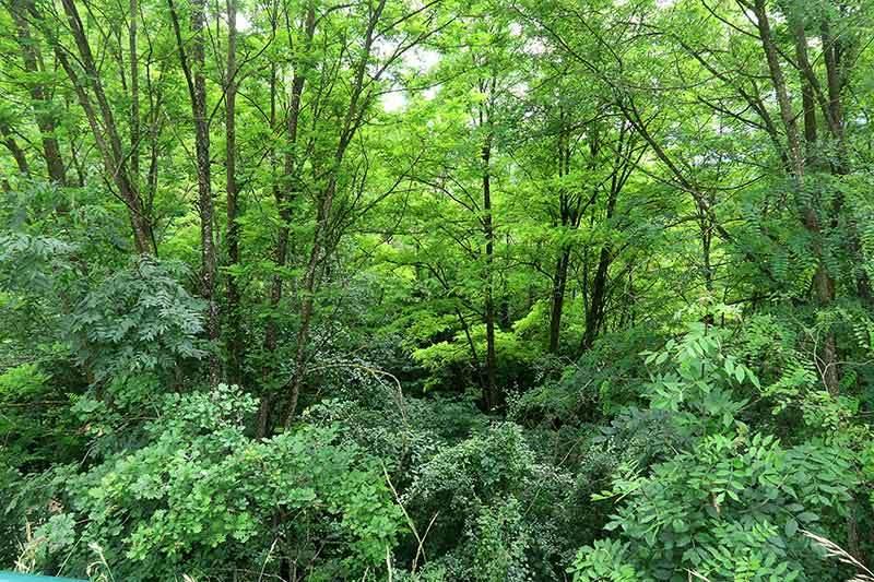 Plus vert que vert / Green , green, green