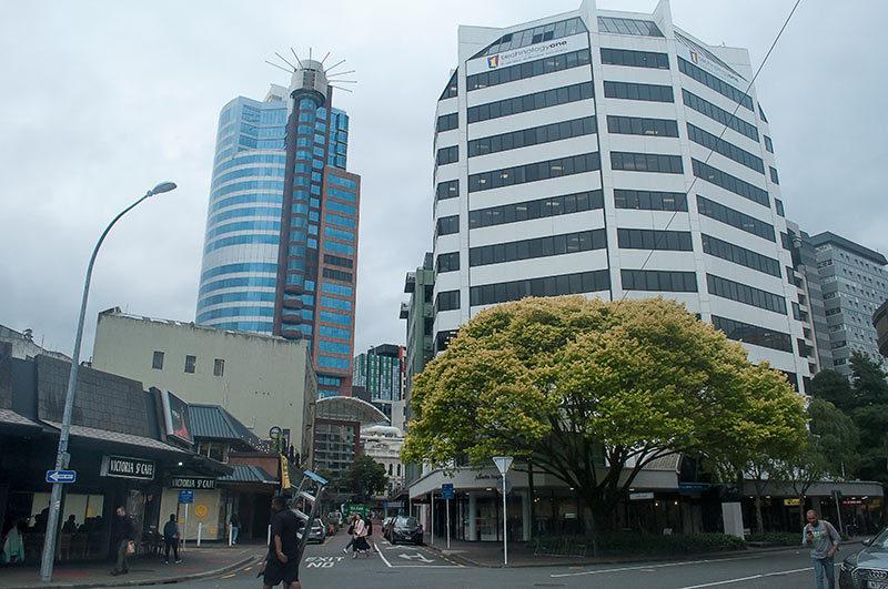 Comme un arbre dans la ville / A tree in the city