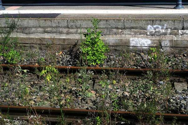 La vie du rail / Life on the rail