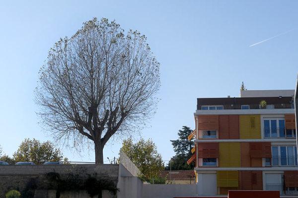 L'arbre dans la ville / The tree in the city