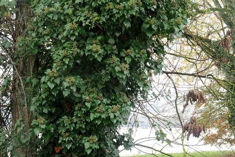 Feuillage / Leaves