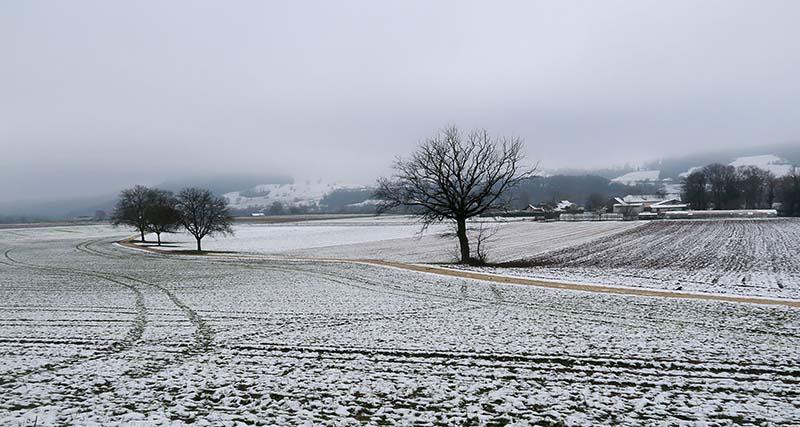Sous la neige / Under the snow