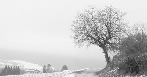 L'arbre / The tree