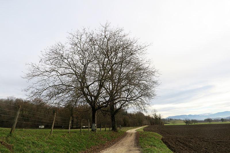 Les arbres / The trees