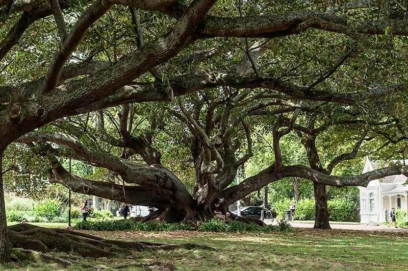 Les arbres dans la ville / Trees in the town