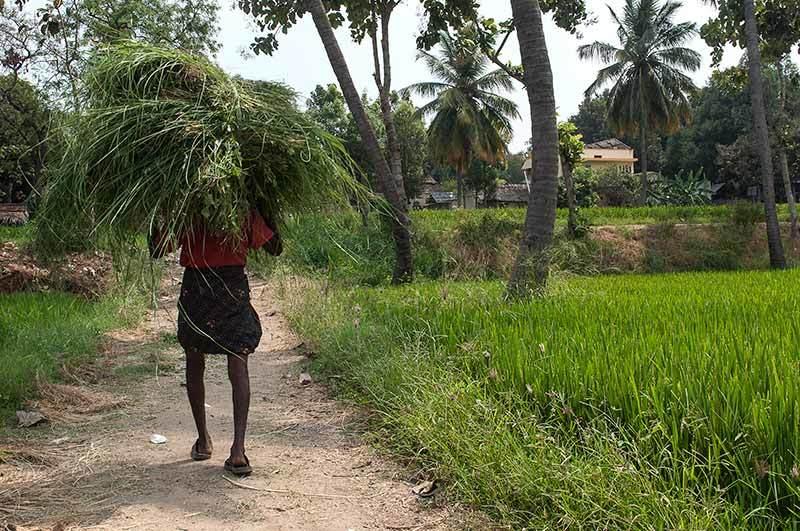 Porteur d'herbe / Carrying grass 2