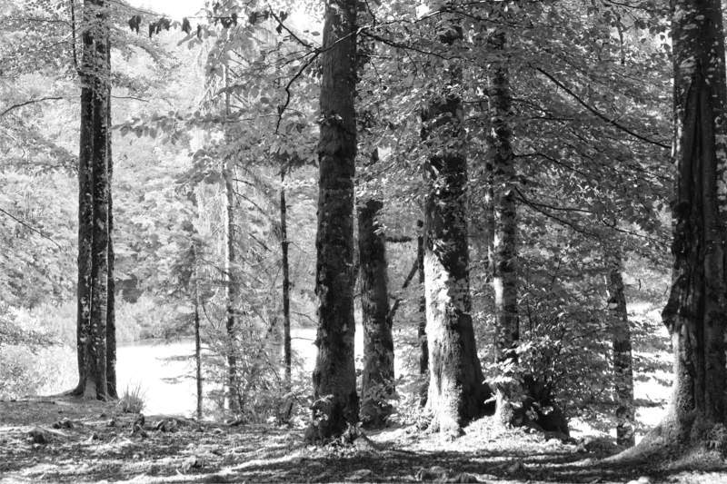 Paix dans les arbres / Quiet in the trees