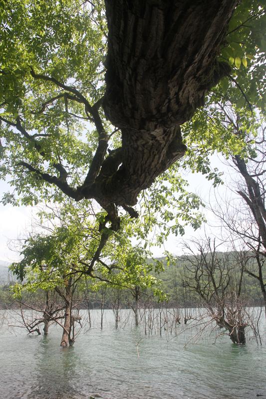 دست نیاز شاخه ها به سوی آب2