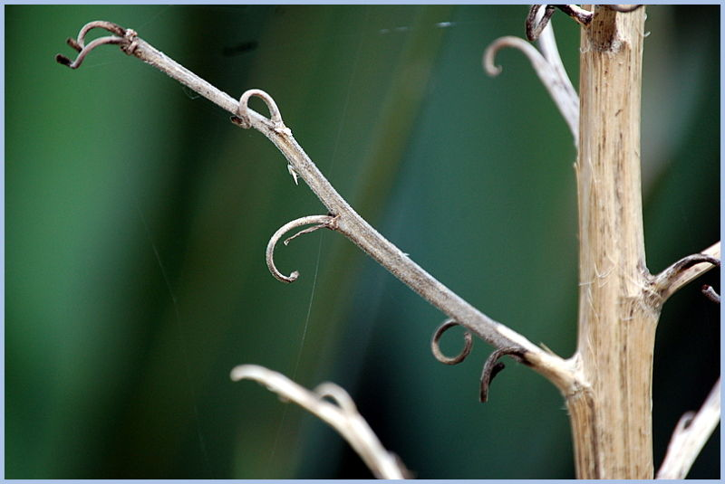 Le fil de l'araignée