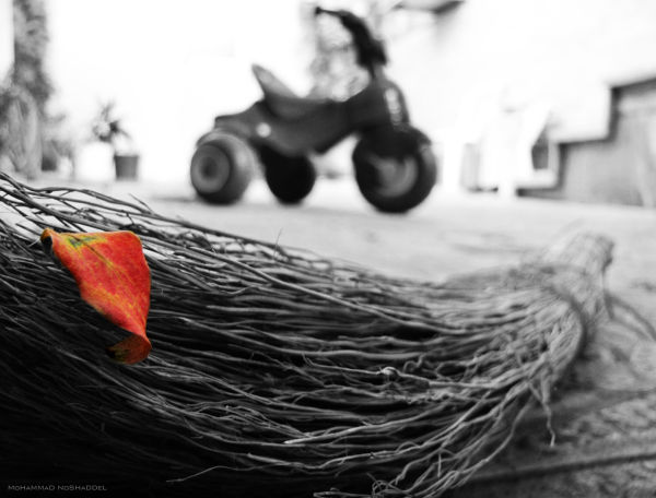Baby Autumn has reborn