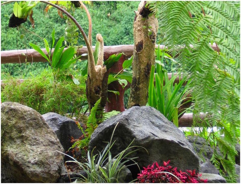 foliage and rocks
