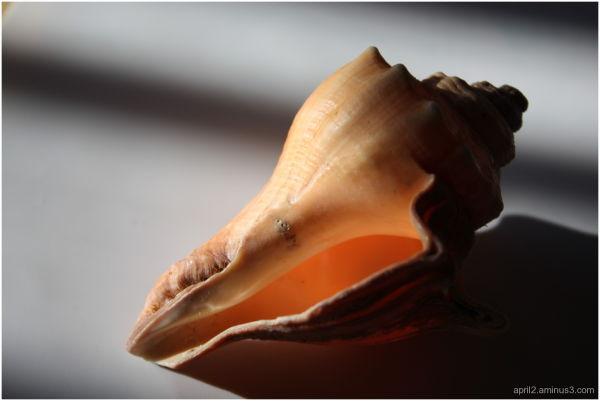 shadowed shell