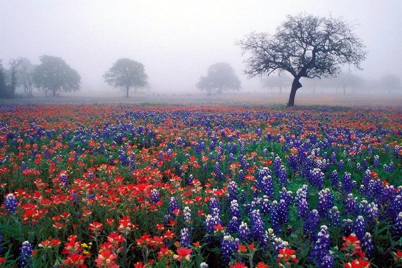 Texas is blooming